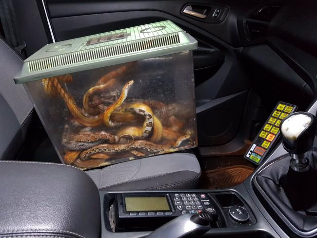 Police find box full of snakes dumped in Somerset town
