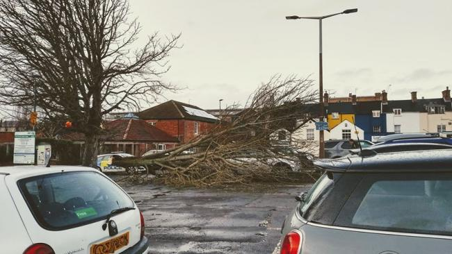 FALLEN: Jill Pack caught the moment a large section of tree fell in a Taunton car park