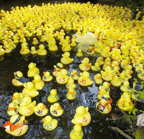 Duck race in aid of charity to be held in Somerset
