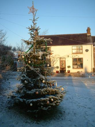 Christmas tree advice at Monkton Elm