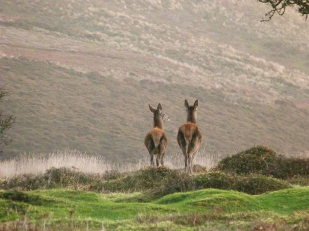 Boost for group hoping to keep Quantocks in public hands