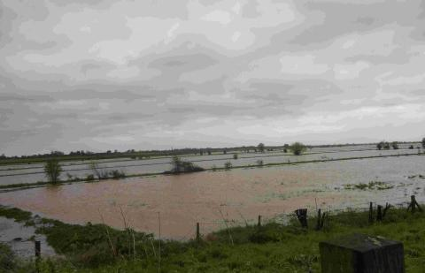 This is The West Country: Flooding near North Curry, Taunton. Photo: stock image.