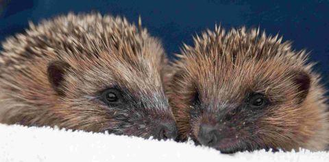 Volunteer drivers sought for wildlife charity