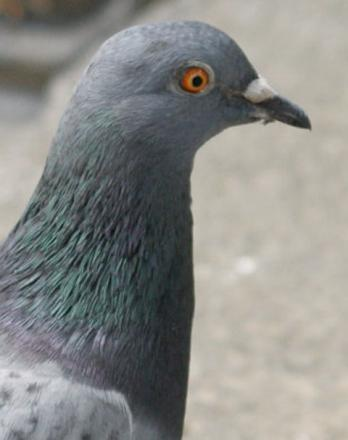 Fire crews called to rescue a pigeon in Burnham