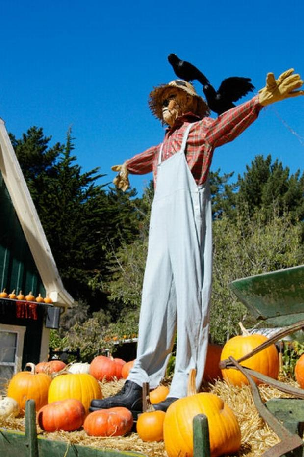 Planning begins for Burnham's Scarecrow Day