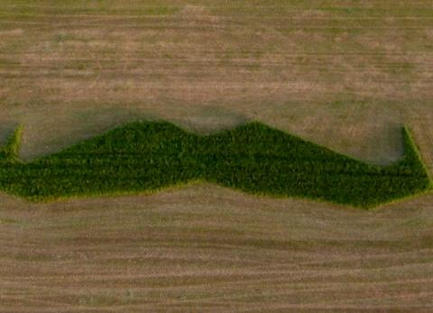 The giant 'mowstache'. Photo: Submitted