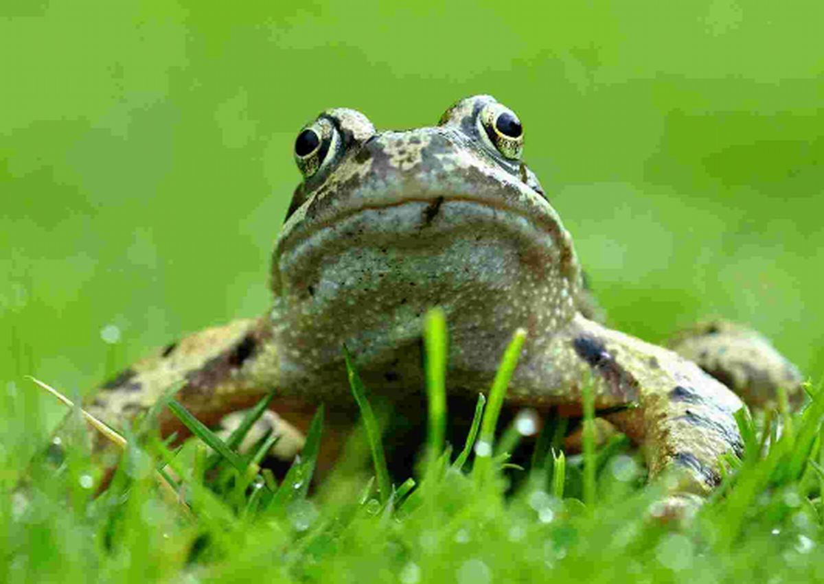 Frogs in your garden?