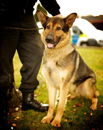 The petition calls for a new offence to be created to protect police dogs from harm.