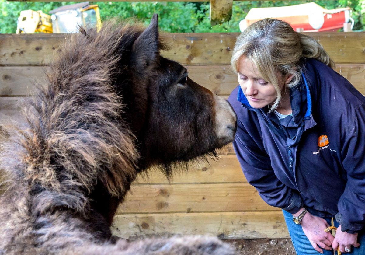 TOPAZ , a moorland pony learning to trust humans with Dawn Westcott. PHOTO: Tricia Gibson.