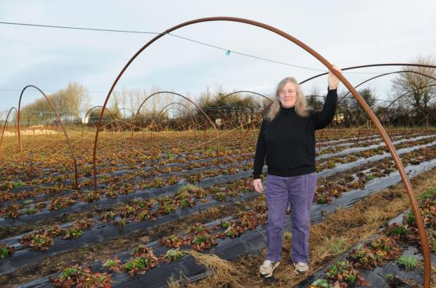 Jan Butterley has been growing raspberries and strawberries since 1981.