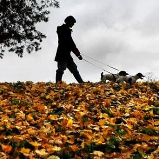 This is The West Country: Cornwall dog owners warned over deadly 'Alabama rot' disease