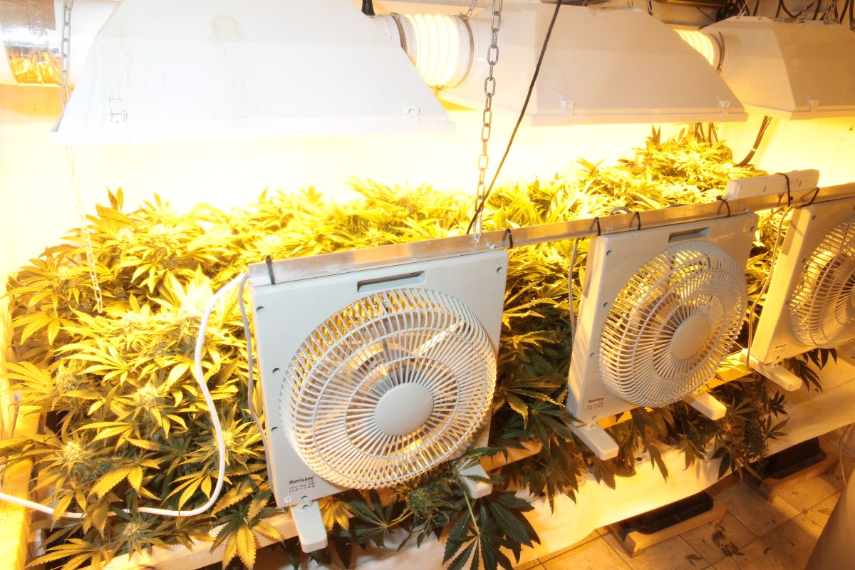 Suspected cannabis farm found in Bri