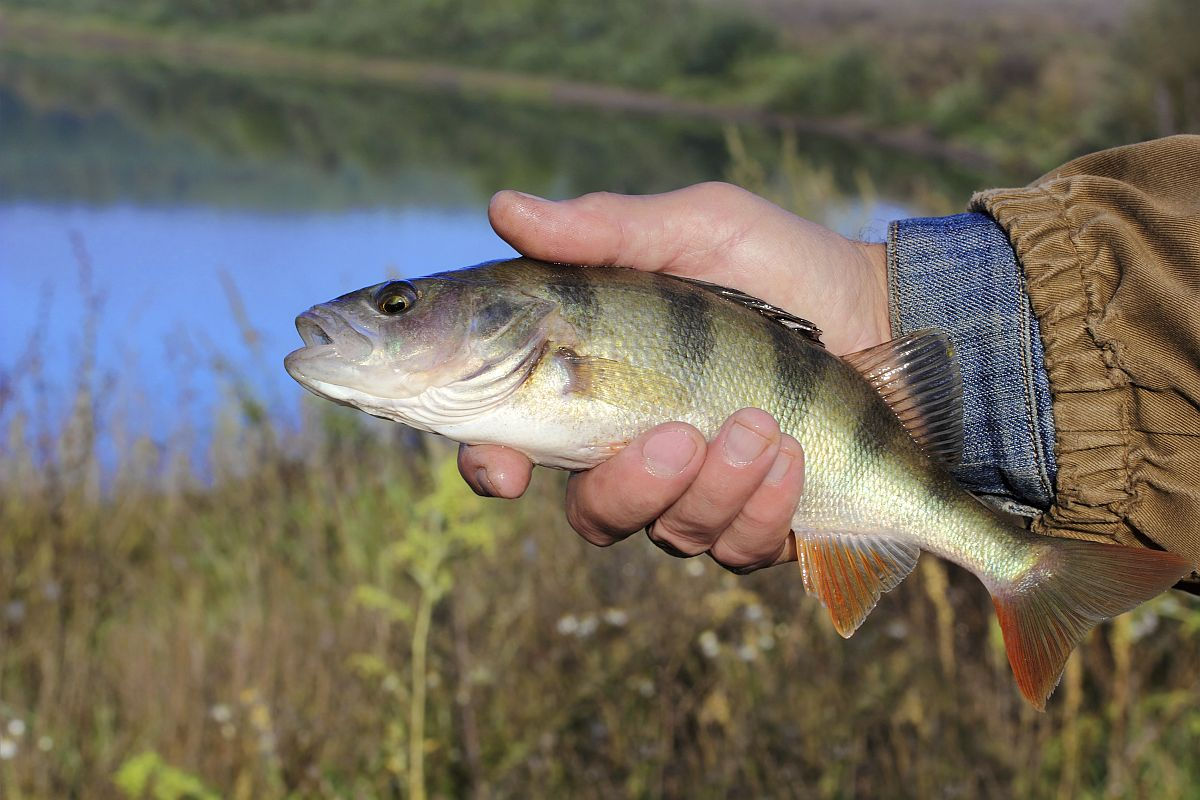 ANGLING: Scales tip in Rich's favour