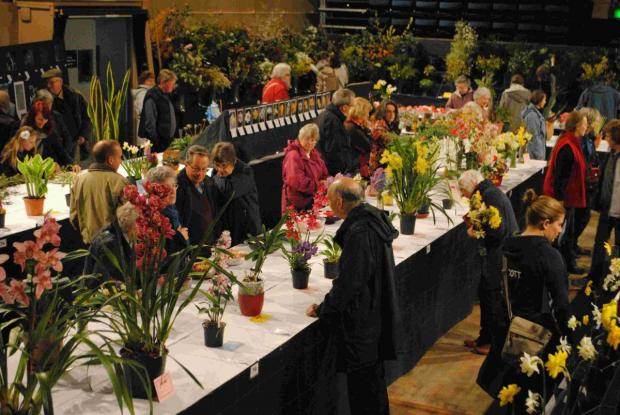 This is The West Country: Record visitors for 'blooming marvelous Falmouth Spring Flower Show: PICTURES