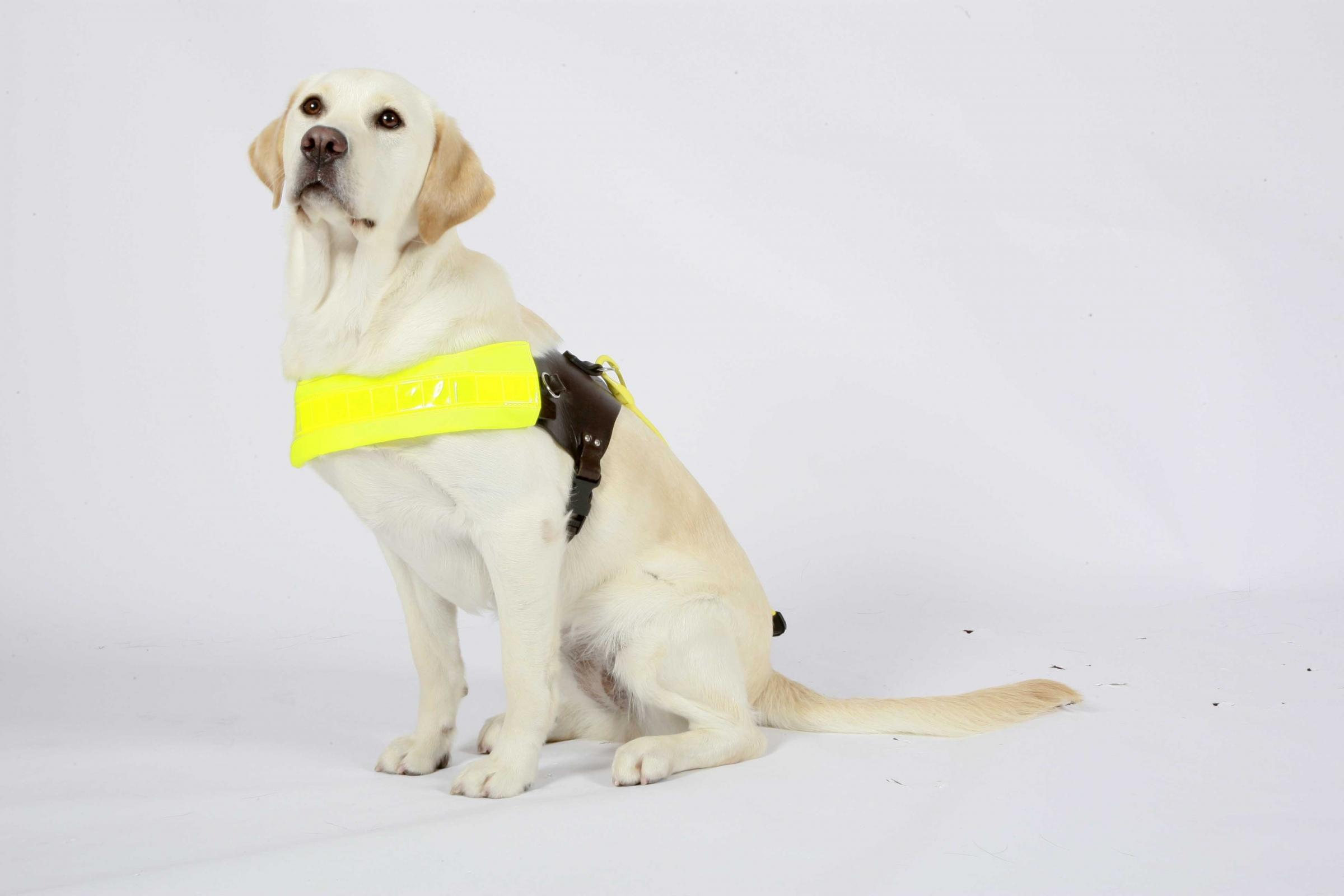 Learn more about guide dogs