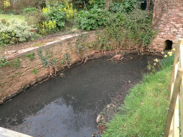 This is The West Country: The brook at Ashford Farm in Cannington turns black after the fertiliser spillage