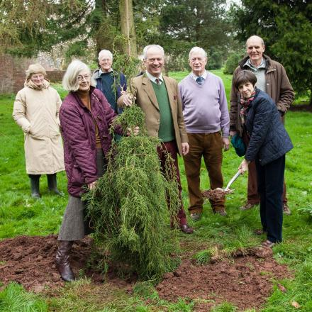 Nynehead Court care home plants rare tree