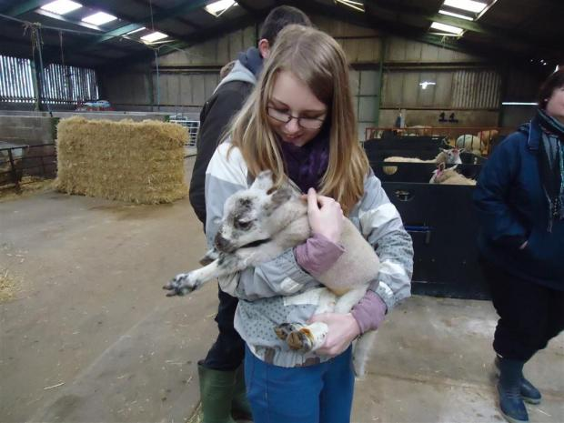 JESS, of Year 10, delicately cradles a lamb on the trip to the farm.