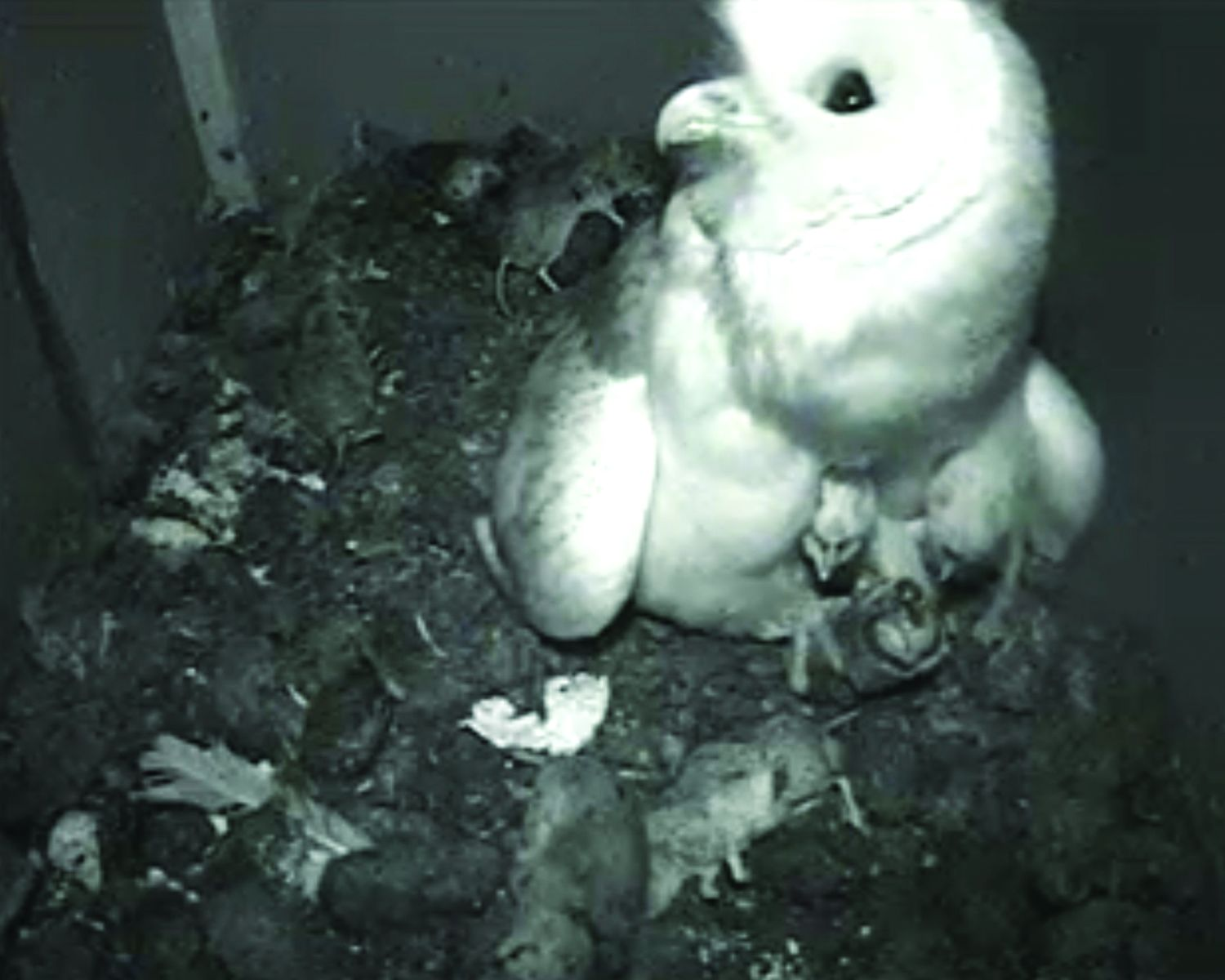 Barn owl nest boxes in South Somerset