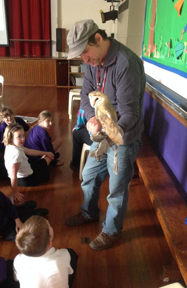 This is The West Country: CHRIS Sperring from the Hawk and Owl Trust showing Bellatrix the barn owl to pupils at Minehead First School. PHOTO: Submitted.