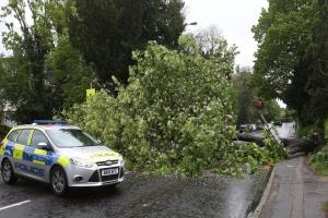 Tree falls on moving vehicle in Axminster