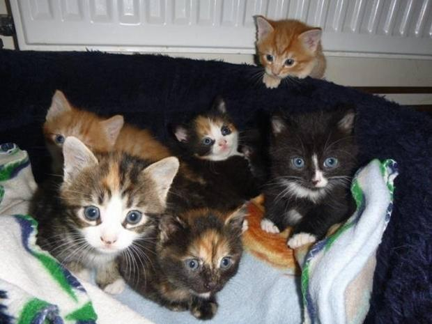 Nine kittens dumped at Ferne Animal Sanctuary