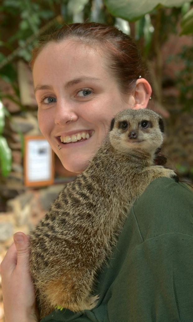 This is The West Country: SAM Pollard with Milly the Meerkat.