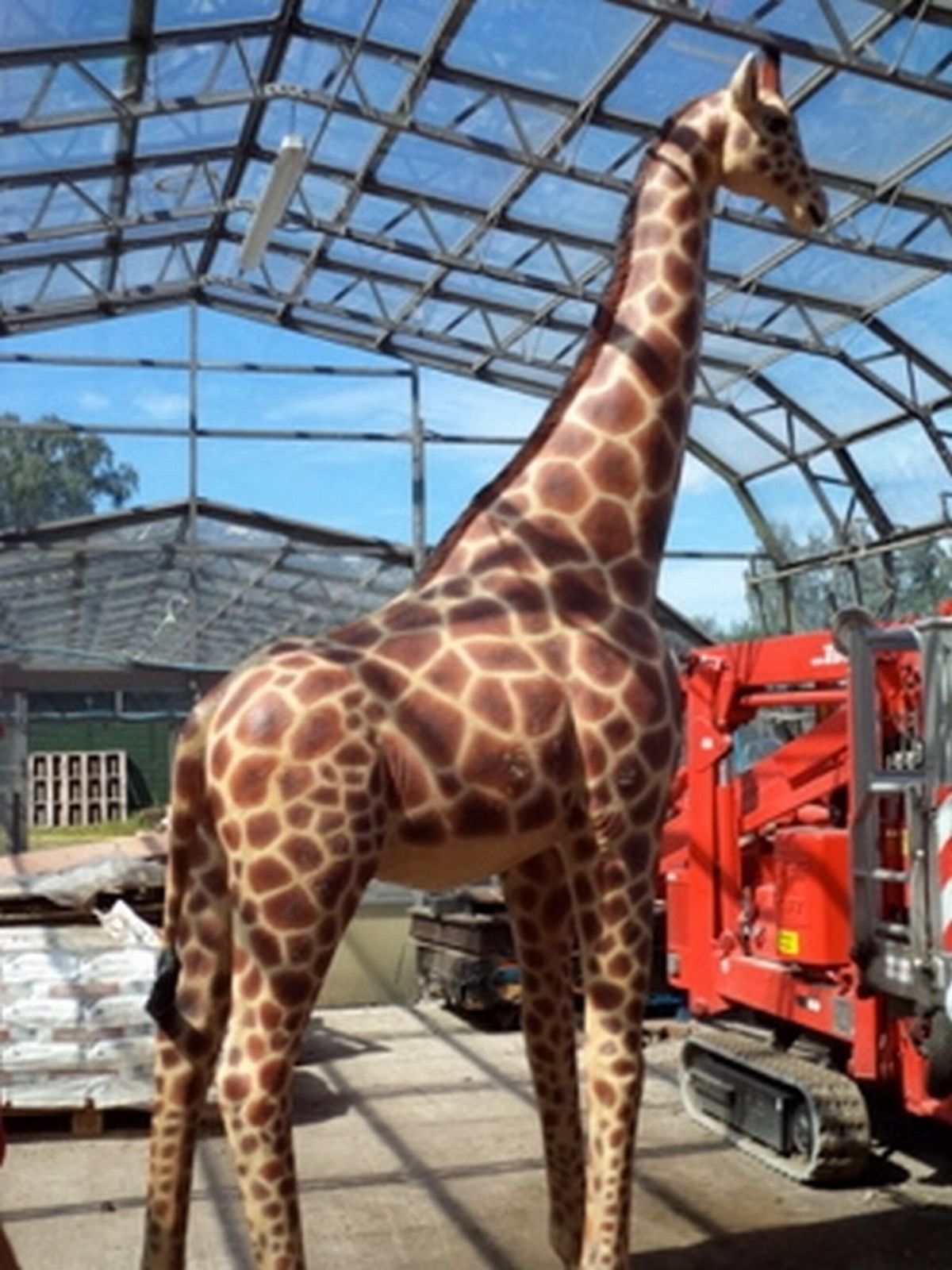 Rarely seen African species turns up in Exeter nursery
