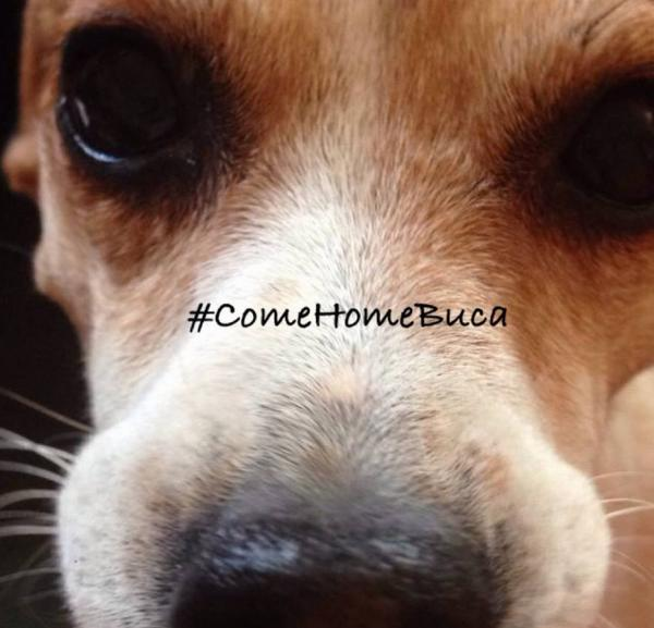 Heartbroken dog owner launches #ComeHomeBuca campaign