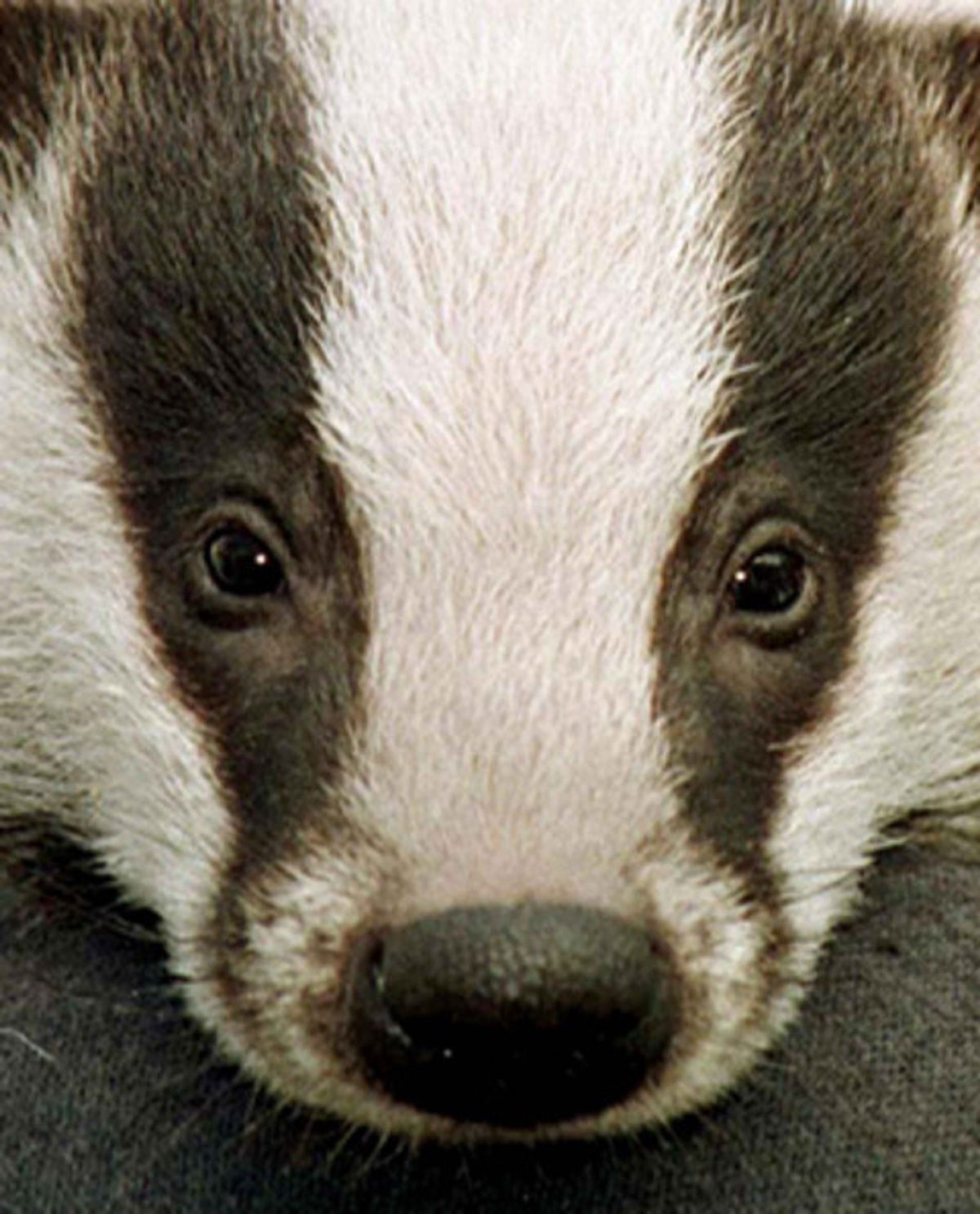 Anti-cull group calls for review