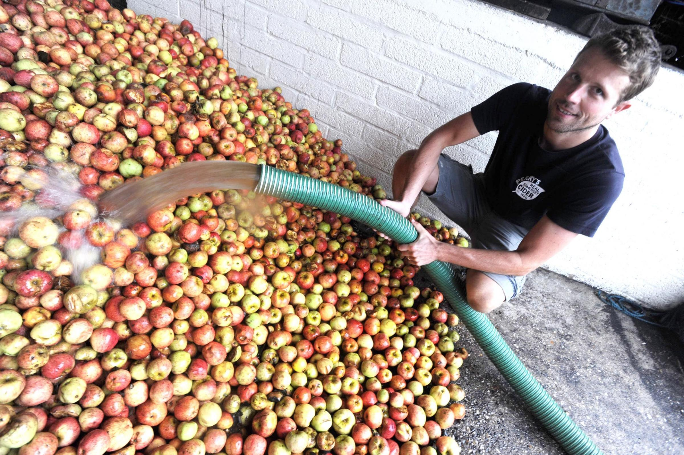 FEATURE: Perrys Cider give The Chard & Ilminster News a look around their orchards