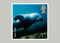 The grey seal stamp  a giant sized version of which postman Jeremy Lethbridge is due to deliver to the Gweek Seal Sanctuary.