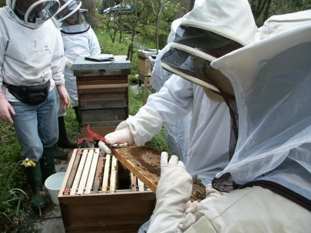 This is The West Country: Calling all bee keepers